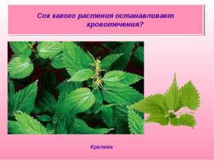Сок какого растения останавливает кровотечения? Крапива