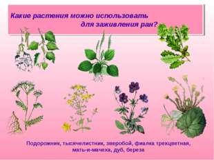 Какие растения можно использовать для заживления ран? Подорожник, тысячелистн