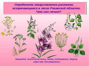 Определите лекарственное растение, встречающееся в лесах Рязанской области. Ч