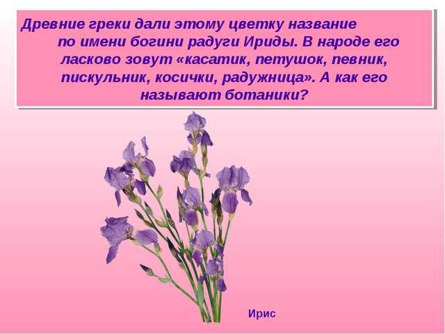 Древние греки дали этому цветку название по имени богини радуги Ириды. В наро...