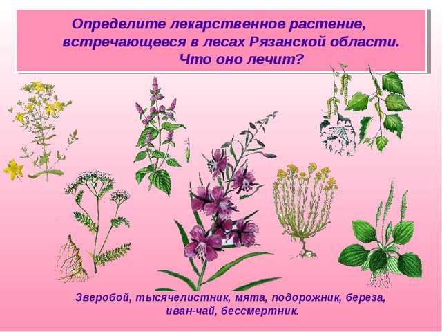 Определите лекарственное растение, встречающееся в лесах Рязанской области. Ч...