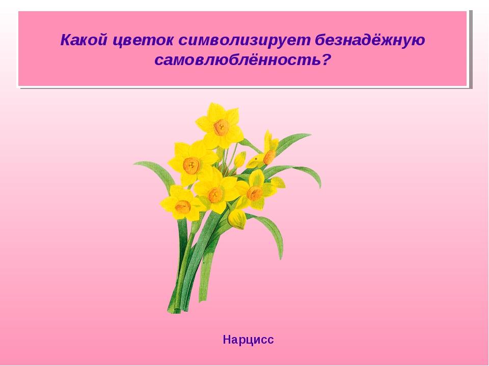 Какой цветок символизирует безнадёжную самовлюблённость? Нарцисс