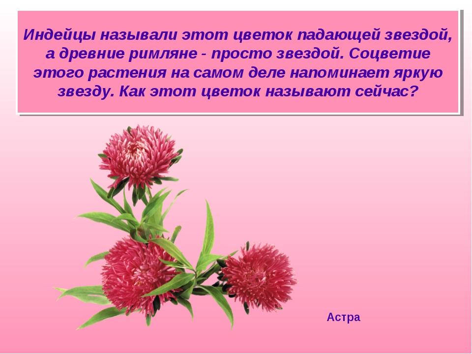 Индейцы называли этот цветок падающей звездой, а древние римляне - просто зве...