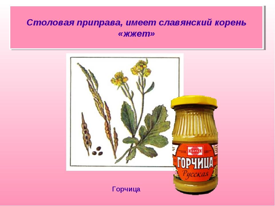 Столовая приправа, имеет славянский корень «жжет» Горчица