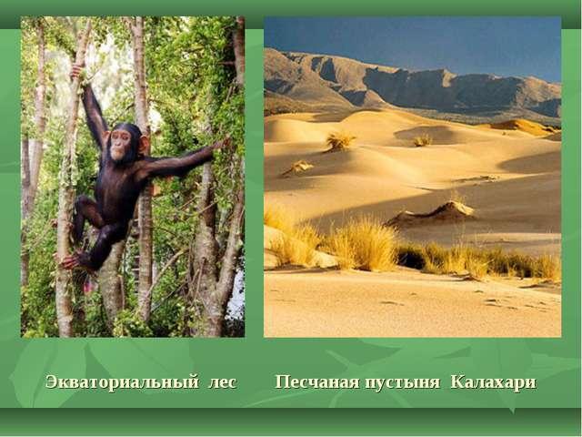 Экваториальный лес Песчаная пустыня Калахари
