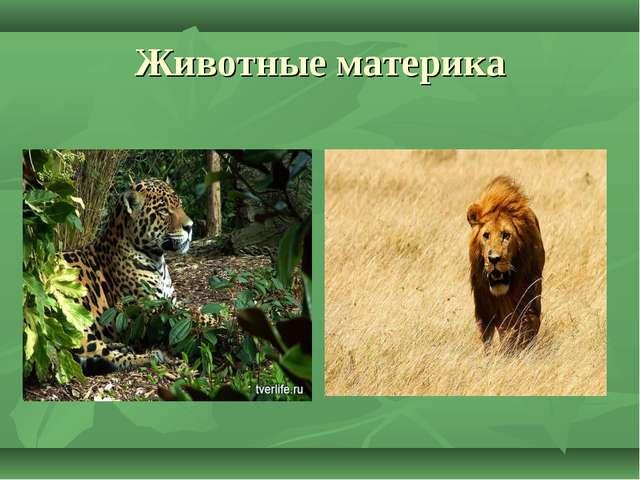 Животные материка