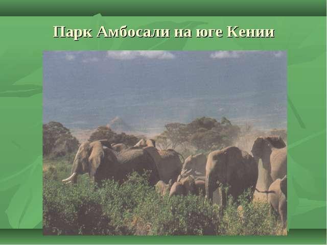 Парк Амбосали на юге Кении