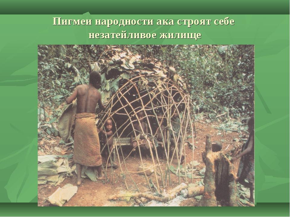 Пигмеи народности ака строят себе незатейливое жилище