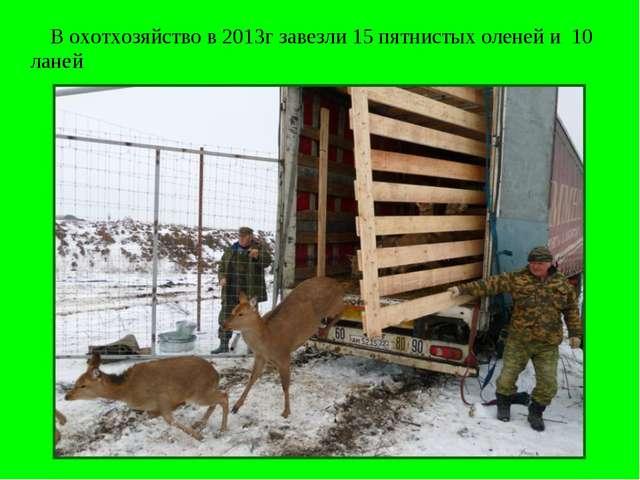 В охотхозяйство в 2013г завезли 15 пятнистых оленей и 10 ланей