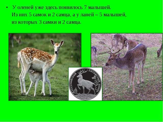 У оленей уже здесь появилось 7 малышей. Из них 5 самок и 2 самца, а у ланей –...