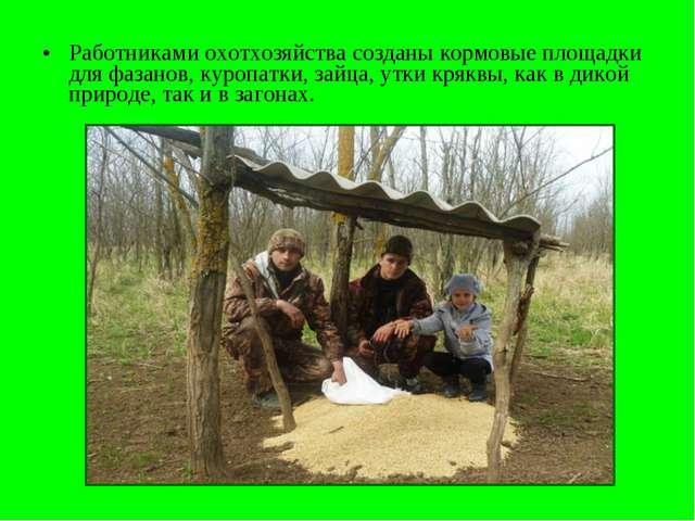 Работниками охотхозяйства созданы кормовые площадки для фазанов, куропатки, з...