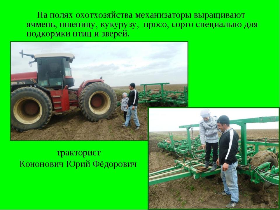 На полях охотхозяйства механизаторы выращивают ячмень, пшеницу, кукурузу, пр...