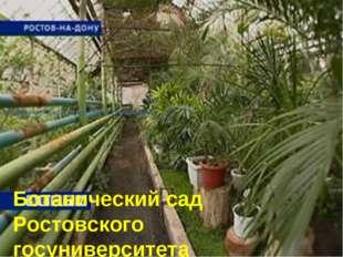 Ботанический сад Ростовского госуниверситета Ботанический сад Ростовского гос