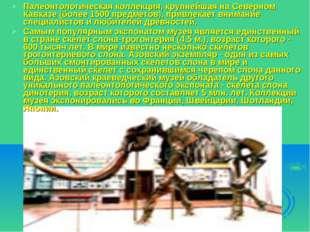 Палеонтологическая коллекция, крупнейшая на Северном Кавказе (более 1500 пред