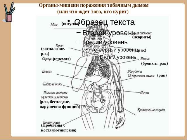 Органы-мишени поражения табачным дымом (или что ждет того, кто курит) (инсул...