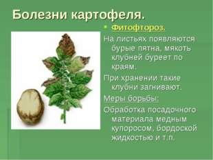 Болезни картофеля. Фитофтороз. На листьях появляются бурые пятна, мякоть клуб