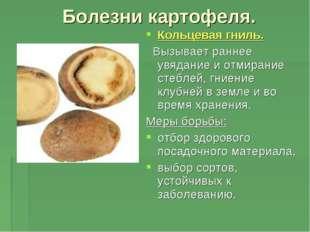 Болезни картофеля. Кольцевая гниль. Вызывает раннее увядание и отмирание стеб