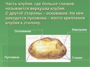 Часть клубня, где больше глазков, называется верхушка клубня. С другой сторон