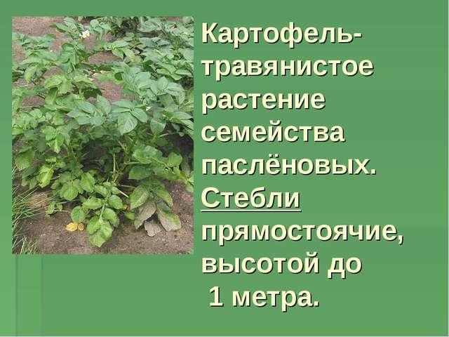 Картофель- травянистое растение семейства паслёновых. Стебли прямостоячие, вы...