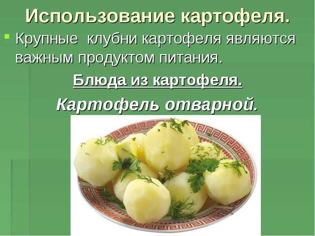 Использование картофеля. Крупные клубни картофеля являются важным продуктом п...