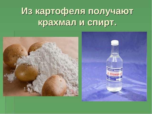 Из картофеля получают крахмал и спирт.