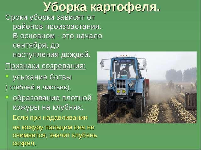 Уборка картофеля. Сроки уборки зависят от районов произрастания. В основном -...