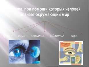 Чувства, при помощи которых человек познает окружающий мир зрение слух осязан