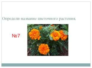 Определи название цветочного растения. №7