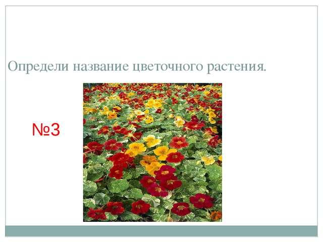 Определи название цветочного растения. №3