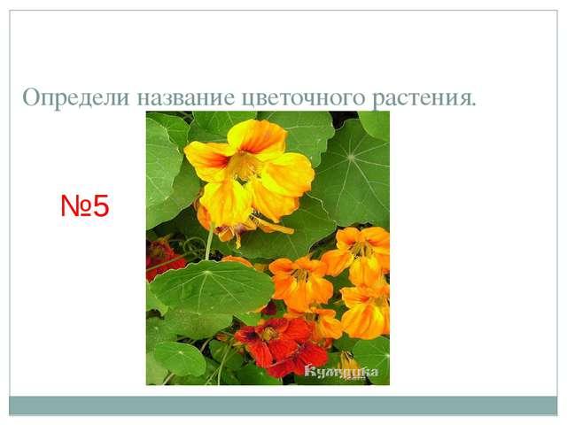 Определи название цветочного растения. №5