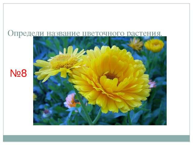 Определи название цветочного растения. №8