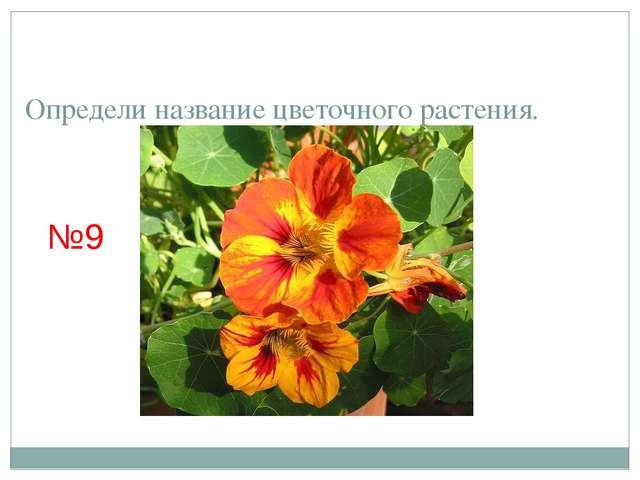 Определи название цветочного растения. №9