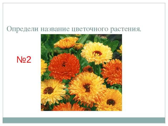 Определи название цветочного растения. №2