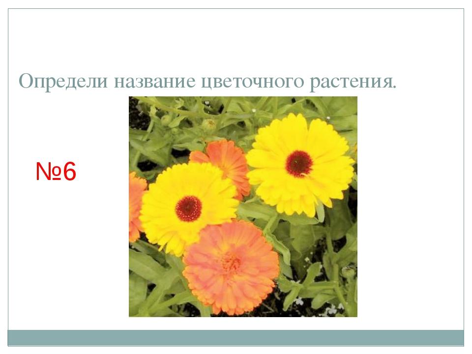 Определи название цветочного растения. №6