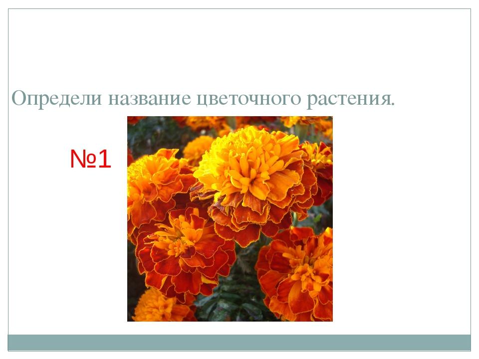 Определи название цветочного растения. №1