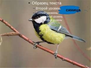 синица http://www.deti-66.ru/