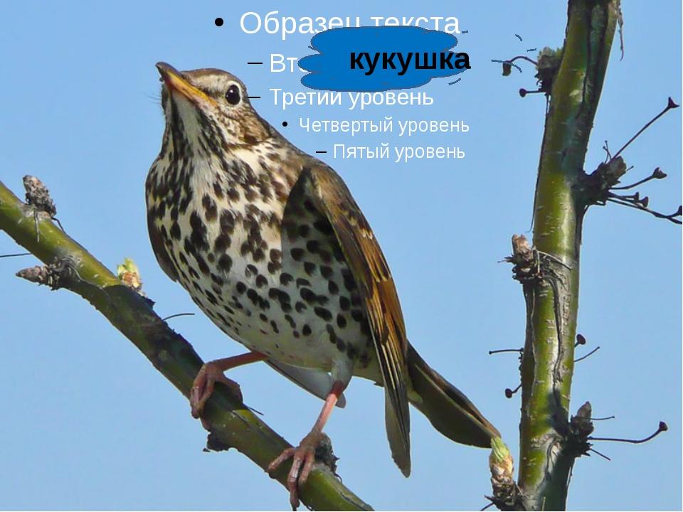 кукушка http://www.deti-66.ru/