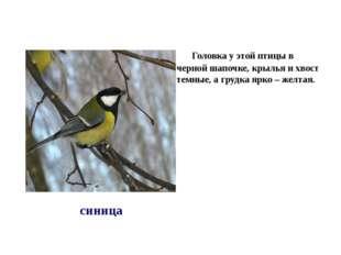 Головка у этой птицы в черной шапочке, крылья и хвост темные, а грудка ярко