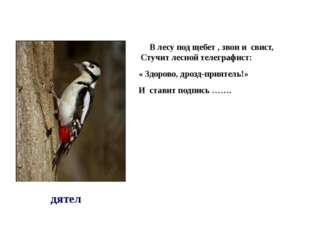 В лесу под щебет , звон и свист, Стучит лесной телеграфист: « Здорово, дрозд