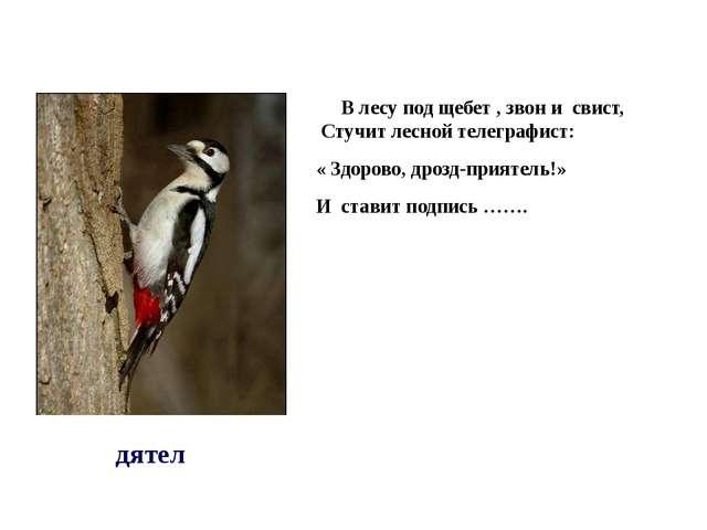 В лесу под щебет , звон и свист, Стучит лесной телеграфист: « Здорово, дрозд...