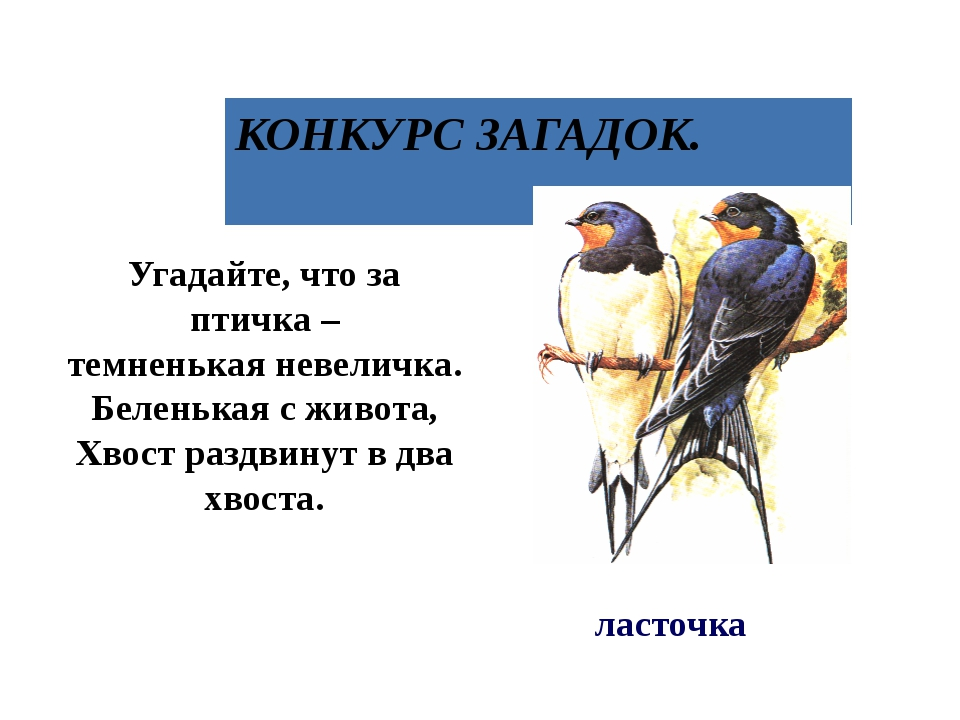 Угадайте, что за птичка – темненькая невеличка. Беленькая с живота, Хвост раз...