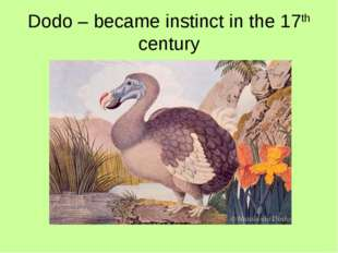 Dodo – became instinct in the 17th century