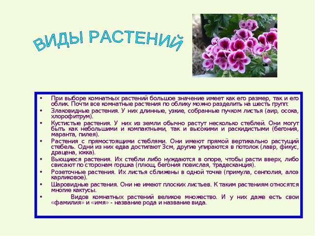 При выборе комнатных растений большое значение имеет как его размер, так и ег...