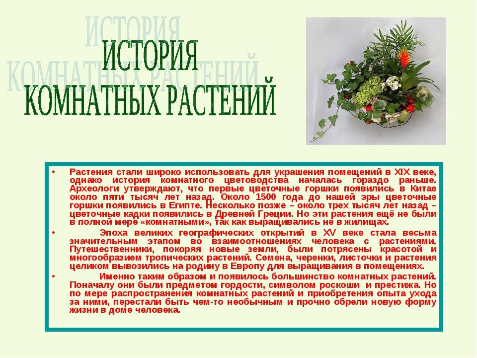Растения стали широко использовать для украшения помещений в XIX веке, однако...