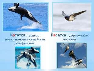 Косатка – водное млекопитающее семейства дельфиновых Касатка – деревенская ла