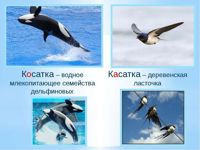 Косатка – водное млекопитающее семейства дельфиновых Касатка – деревенская ла...