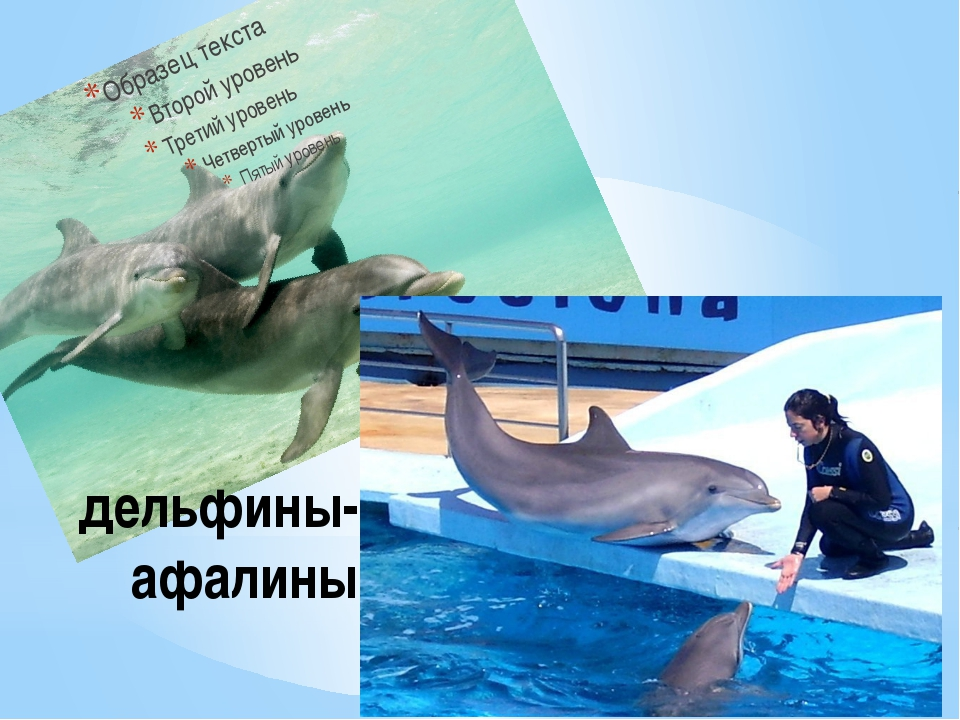 дельфины-афалины