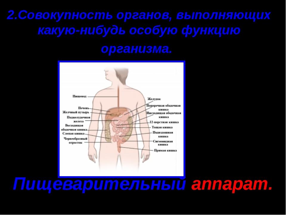 2.Совокупность органов, выполняющих какую-нибудь особую функцию организма. Пи...