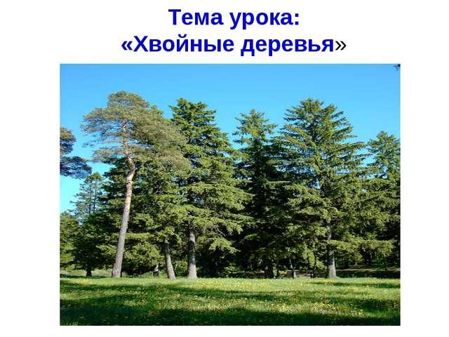 Тема урока: «Хвойные деревья»
