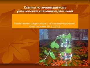 Опыты по вегетативному размножению комнатных растений: Размножение традесканц